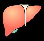 Liver PictureLiver Clipart