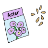 Aster Seeds Picture