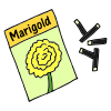 Marigold Seeds Picture