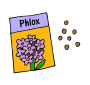 Phlox Seeds Picture