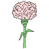 Carnation Picture