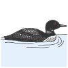 Loon Picture