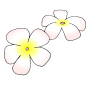 Hawaiian Flowers Picture