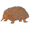 Spiny Anteaters Picture