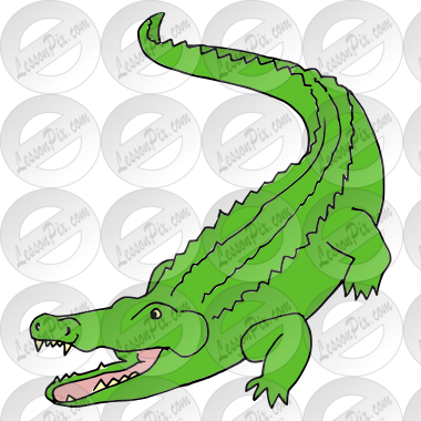 Alligator Picture