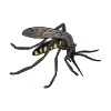 Mosquito Picture