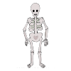 5+Skeletons Picture
