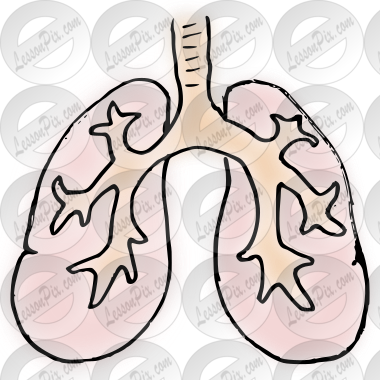 lungs Picture