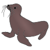 Seal Picture