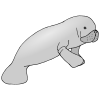 sea cow Picture