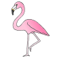 Flamingo Picture