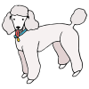 poodle (dog) Picture