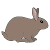 lapin Picture