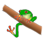 Tree Frog Picture