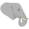 tusks Picture