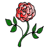 Roses Picture
