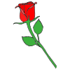 Rose Picture
