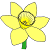 yellow+daffodil Picture