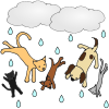 Raining+Cats+and+Dogs Picture