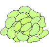 Lima Beans Picture