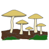 Mushrooms Picture
