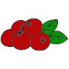 cranberries_ Picture