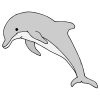 Dolphin Picture