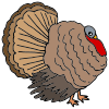 Turkey Picture