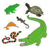 Reptiles and Amphibians Picture