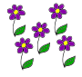 Flowers Picture