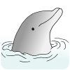 dolphin head Picture