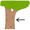 Bark+can+also+refer+to+the+outside+covering+on+a+tree+trunk. Picture
