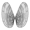 butterfly shell Picture