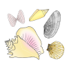 seashells Picture