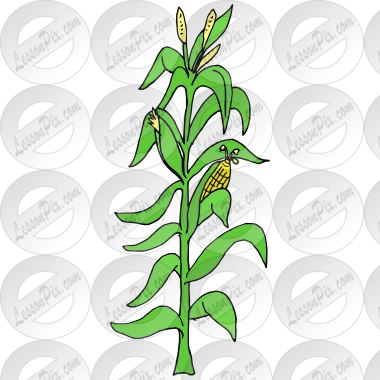 Cornstalk Picture for Classroom / Therapy Use - Great Cornstalk ...