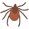 tick Picture