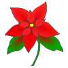 Poinsettia Picture
