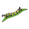 Caterpillar Grows Picture