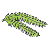 Fern Picture