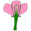 Parts of a Flower Picture