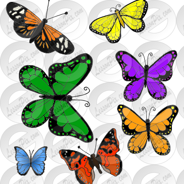 7 butterflies Picture